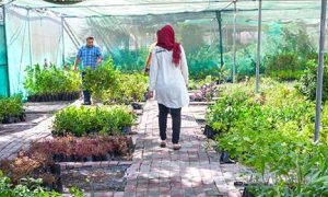 Baladiya Nursery Plants
